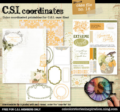 CSI_coor_reveal_preview18