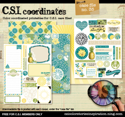 CSI_coor_reveal_preview35